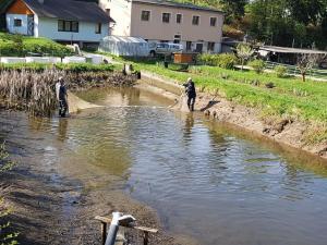 Přelovování rybníků - Pstruh Duhový 28.4.2018